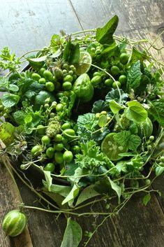 Green Flowers, Summer Flowers, Flower Images, Flower Art, Million Flowers, Flora Design, Modern Flower Arrangements, Garden Whimsy, Language Of Flowers