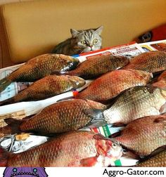 "hearsegirl: Carp Diem cat!  Christina: This food is raw!  Peter Pantsless: *head asplode""  tib gubb: honestly that cat looks a bit frightened, which is awesome.  tib gubb: the mother load...  Teechur: Santa! You remembered!  Alkavarion: *heavy breathing*  Niels Bohr: Intensifying intensifies.  Mexico: My god, it's full of fish."