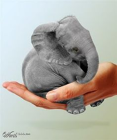 Encyclopaedia of Babies of Beautiful Wild Animals: The Baby Indian Elephant
