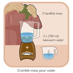 Make your own moss paint