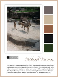 Wildlife influence: the zebra's wavy line patterning takes on the colored blind lion! Location: Milwaukee, Wisconsin -mejudydesign.com Milwaukee Wisconsin, Line Patterns, Color Stories, Zebras, Blind, Wildlife, Movie Posters, Design, Shutter