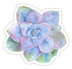 succulent • Also buy this artwork on stickers.