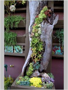 Un huerto o jardín vertical es una genial idea no solo ahorran un motón de espacio sino que se puede transformar en un elemento decorativa, que a la vez nos sirva para producir alimentos saludables y de calidad. El primer consejo es empezar pequeño y luego agrandarse, también preocuparse del riego y de la profundidad