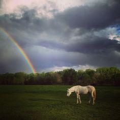 #newmexico #fantasy #horse #rainbow #alcade #espanola #nature #peaceful #streetphotography #agatagravantephotographer #iphone #followme #photoday