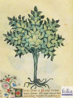 """""""L'olmo è un albero noto. La radice dell'olmo cotta in acqua e messa sopra le ossa rotte, le riattacca. La sua corteccia fresca legata sopra il luogo di una ferita, la consolida."""" http://www.foliamagazine.it/wp-content/uploads/2013/05/Olmo-758x1024.jpg"""