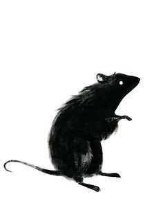 Black Rat by Ingrid Alice. Black Rat, Black And White, Illustrations, Illustration Art, Carte Harry Potter, Animal Drawings, Art Drawings, Rat Tattoo, Inspiration Artistique