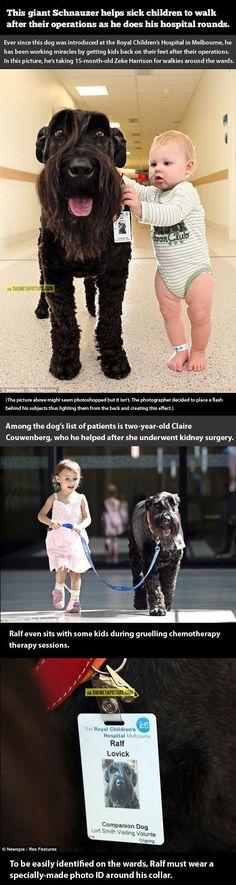 Q bello! Lastima que por aca aun son cortos de mente y en cada hospital hay letreros que no permiten la entrada a los perritos :'(: