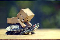 Box riding a turtle