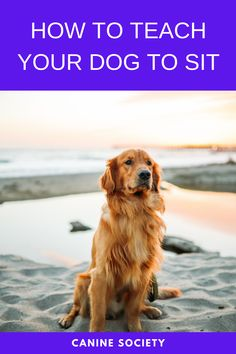 How To Teach Your Dog To Sit One of the simpler and yet most useful commands you can teach your dog is the Sit command. It gives you a wonderfully easy way to get your pet pooch under control when you need to keep it in one place. Dog Commands Training, Dog Training, Green Living Tips, Dog Food Brands, Dog Behavior, Go Green, Step Guide, Dog Friends, Pet Care