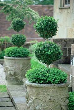 topiaries.. classic and lovely