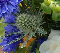 Florissimo - Flowers for weddings and events in Shropshire. ERYNGIUM (THISTLE), ALL YEAR. From Florissimo Flower Directory at https://uk.pinterest.com/ByFlorissimo/flower-directory/ | Blue-green and white-green