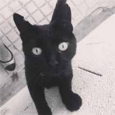 #1 - Moreneta Hembra esterilizada en agosto del 2013. Matriarca de la colonia de la Costereta. Es conocida en todos los restaurantes de la zona y siempre le dan algún premio.   Ràpita Felina - Gats - Gatos - Cats - Chats - TNR - CES   https://www.facebook.com/rapitafelina