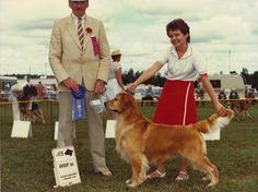 Am./Can. CH. Golden Marks Murphey  (9/8/1979-1994) Golden Retriever
