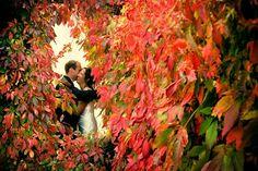 Love the rich autumn colours