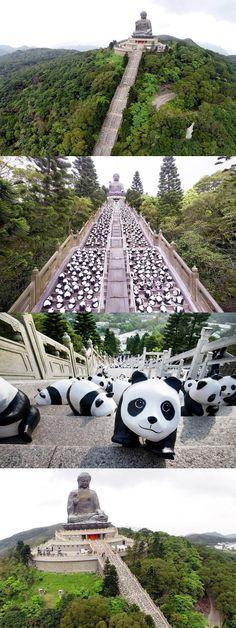 "1600 ""pcs"" PANDA @ Lantau Island, Hong Kong Chinese Festival, Hong Kong, To Go, Places To Visit, Sidewalk, Wanderlust, Island, Architecture, Paper"