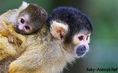 Baby monkey 8     #babymonkey  #cutemonkey   #littlemonkey   #Sweetmonkey   #monkey  #babyanimals  #cuteanimals