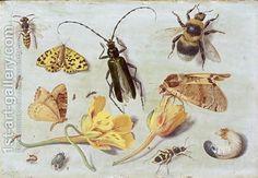 Jan van Kessel - insects