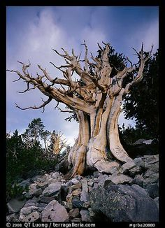 1000+ ideas about Great Basin on Pinterest | Travel usa, Utah and ...