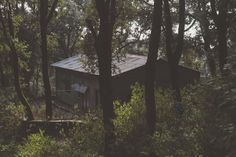 #aawara #aawaratraveler #amidst #amidstjungle #fun #homeless #hut #hutinjungle #instagram #jungle #junglehome #junglehouse #nomad #tinhut #tourism #travel #travel photography #traveler #traveling #wanderer #wanderlus 4k