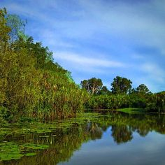 Yellow River, #Kakadu National Park NT #Australia