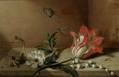 "ღღ Jacob Marrel (1634) ""Still life with a tulip, anemones, lily-of-the-valley, caterpillar, butterfly and other insects on a wooden ledge' oil on panel"