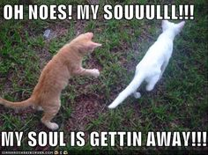 Funny-pictures-kitten-soul-escapes