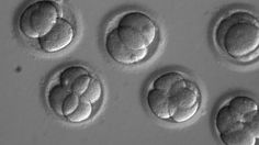 US scientists And South Korea manage for the first time to correct a serious hereditary disease in human embryos - http://howtocureyou.ml/2017/08/08/us-scientists-and-south-korea-manage-for-the-first-time-to-correct-a-serious-hereditary-disease-in-human-embryos-2/