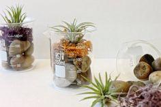 Terrarium in lab flasks.