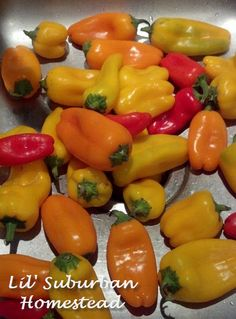 Karen Lynn's favorite Sweet Pepper Mustard recipe! A must for your pantry! #foodiechats #recipe #canningchat