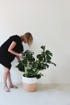 hi! i thought it'd be fun to have my friend molly of pop up greens to share some tips for caring for your favorite house plants, as well as alternatives to each. pop up greens is an LA based …