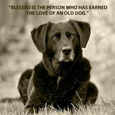 I love old dogs. And they deserve to be.