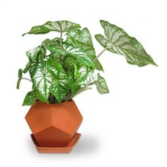 Geo Planters, probably the coolest way to house a plant.