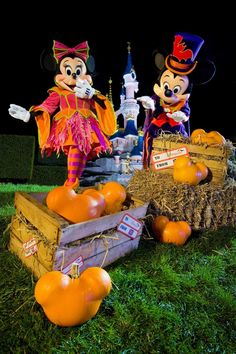 Disney!  I love Minnie's costume and the Mickey-shapped pumpkins!!