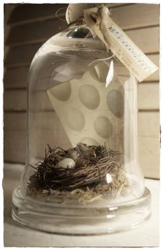 Small cloche with nest, moss, 2 plastic eggs, feather and egg print in the background. The cloche sits on a glass base and is finished off with a tag that says Theres a song in the air. Measures 7.5 inches high and 4.5 inches wide.