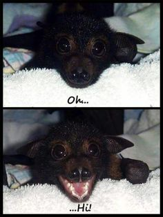 Friendly bat