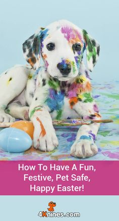 With all the excitement of families gathering together and stepping outside for some Easter fun, it's also a good time to review some innocent looking dangers in order to avoid them. In today's guest article, Dorothy Wills-Raftery from FiveSibes: Siberian Husky K9 News & Reviews shares tips on how you can have a fun and safe Easter with your canine companions. Read more here!