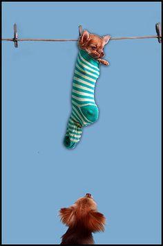 Hanging Around by Natures Optimist, via Flickr