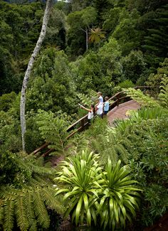 Relax and renew at Tintoela's Luxury Retreat. Beautiful Islands, Beautiful Places, Norfolk Pine, Places To Travel, Places To Visit, Wake Island, Islands In The Pacific, Norfolk Island, Christmas Island