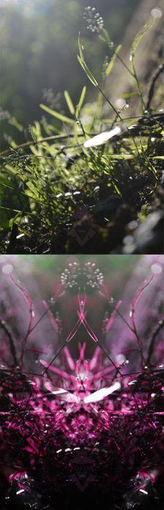 Rorschach Test, Anatomy Tutorial, Nightingale, Concept Art, Cool Photos, Art Photography, Pink, Tutorials, Inspire
