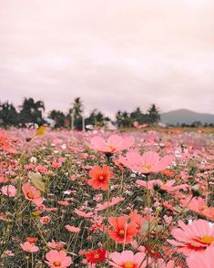 Finding the most inspiration in this incredible photo that posted in dspink - this dreamy flower field in Thailand is all my… 266345765449537465 Nature Aesthetic, Flower Aesthetic, Aesthetic Vintage, Aesthetic Backgrounds, Aesthetic Wallpapers, Mother Earth, Beautiful Landscapes, Aesthetic Pictures, Flower Power