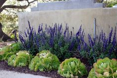 Inexpensive Landscaping Ideas to Beautify Your Yard There are many landscaping ideas that are high impact without a high price tag. Here's a few cheap landscaping ideas to help you create a yard you'll enjoy. Cheap Landscaping Ideas, Water Wise Landscaping, Succulent Landscaping, Backyard Landscaping, Landscaping Design, Southern Landscaping, Landscaping Software, Yard Design, Luxury Landscaping