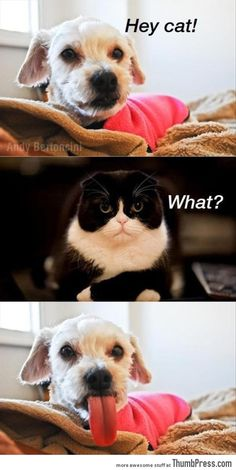 Funny Animals images of the hour (6:01:01 PM PST  Thursday, February 5, 2015) – 12 pics