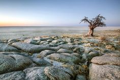 Picture of a lone baobab on the edge of Kubu Island, Botswana, Africa Lonely Planet, Parc National, National Parks, Safari Online, African Origins, Okavango Delta, Natural Wonders, Tourism, Places To Visit
