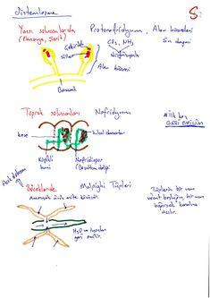 Boşaltım Sistemi Biology, Karma, Language, Bullet Journal, Notes, Math, School, Check, Report Cards