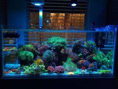 Nutrients and the many ways you fight/control them! Coral Reef Aquarium, Marine Aquarium, Aquarium Fish Tank, Saltwater Aquarium Beginner, Saltwater Fish Tanks, Nano Reef Tank, Reef Tanks, Reef Aquascaping, Life Pictures