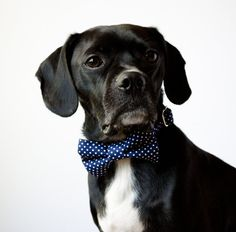 Navy Blue Polka Dot Bow Tie Dog Collar by SillyBuddy on Etsy, $42.00