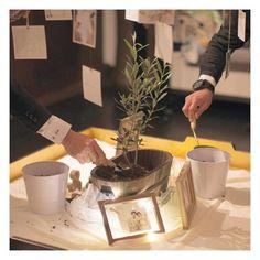 ウェルカムスペースでゲストに土をかけてもらったオリーブの木。オリーブの木は、平和の象徴でるとともに「夫婦の木」とも言われているそうです。