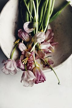 Takes from the flower diary: faded tulips - Suvi sur le vif | Lily.fi