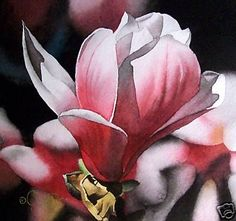 Magnolia, painting by artist Jacqueline Gnott