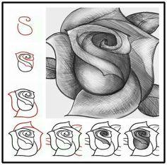 Rose                                                       …